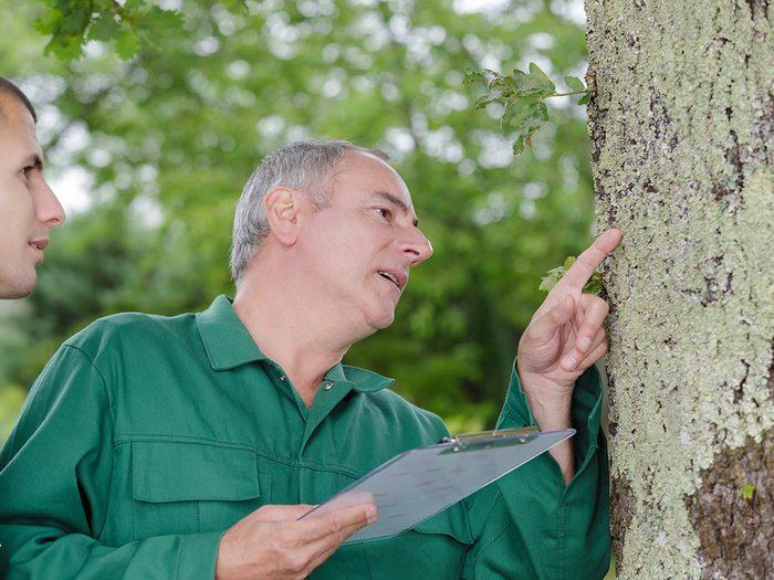 Arborist inspecting tree