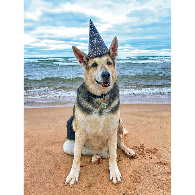 Dog celebrating birthday on beach