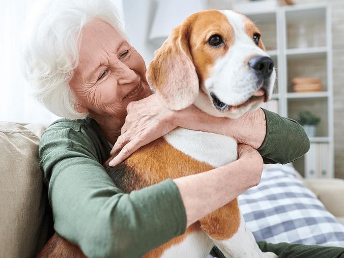 Best Dogs For Seniors Beagle