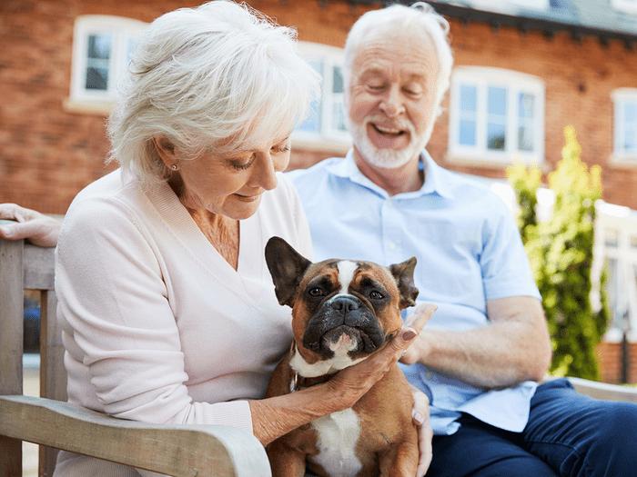 Best Dogs For Seniors French Bulldog