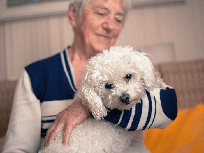 Best Dogs For Seniors Maltese