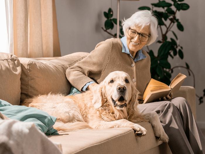 Best With Grandkids Golden Retriever
