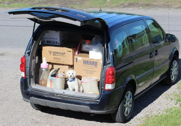 Candid photography - Dog in van