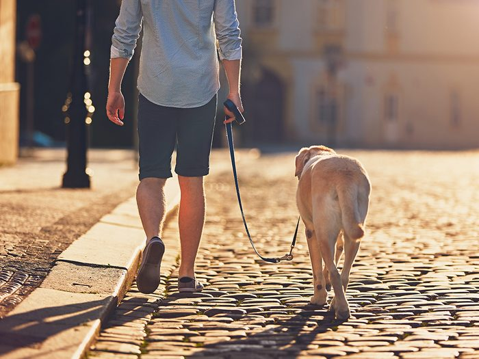 Natural remedies for high blood pressure - morning walk with dog