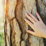 9 Signs Your Tree Is Dying