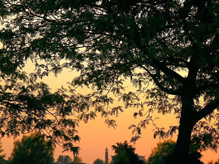 Sunset pictures - trees in Sarnia Ontario