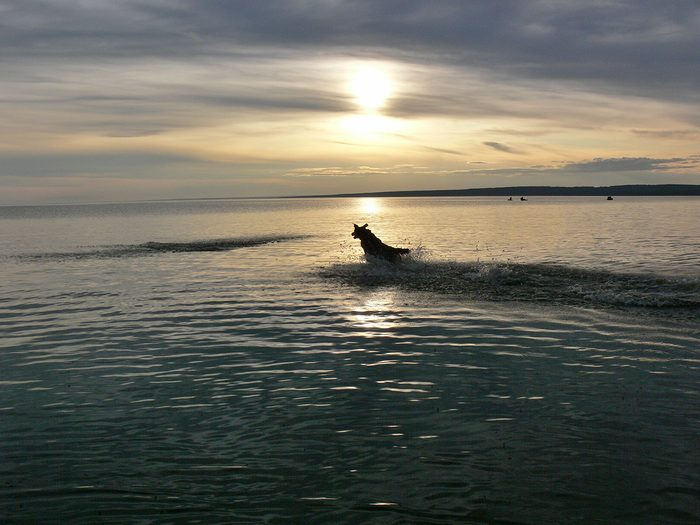 Dog in Slave Lake - Sunset pictures