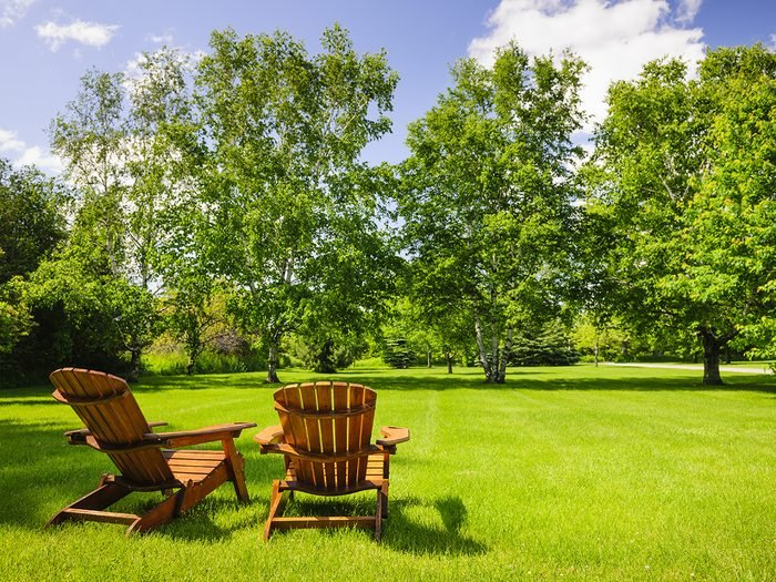 Signs your tree is dying - trees in yard with muskoka chairs