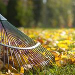 Should You Rake Leaves or Just Leave Them?