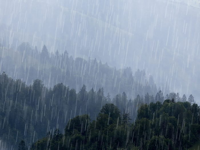 Wettest place in Canada - heavy rain over forest