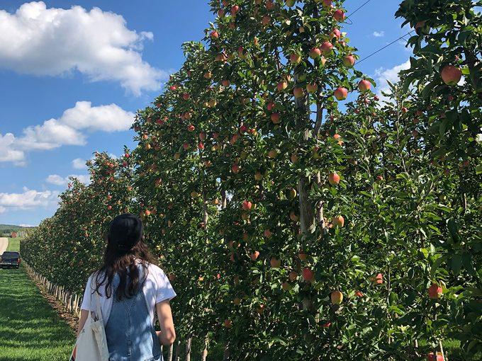 Apple Pie Trail Hannah Orchard