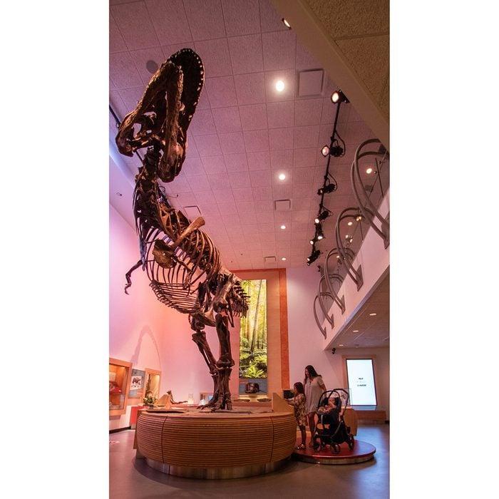 Canadian museums artefacts - World's largest T. Rex